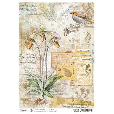 Rizspapír A4 - Botanical