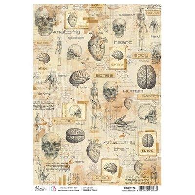 Rizspapír A4 - Human Anatomy