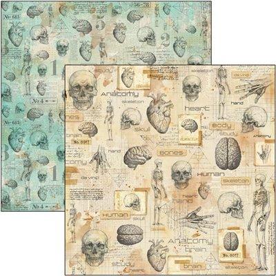 "Human Anatomy 12""x12""-es papír"