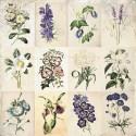 Garden Party mini kollekció -  6 db 12x12-es papír
