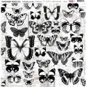 Átlátszó fólia - Butterfly Garden - 12x12